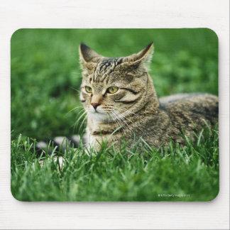 Katt som ljuger i gräs musmatta