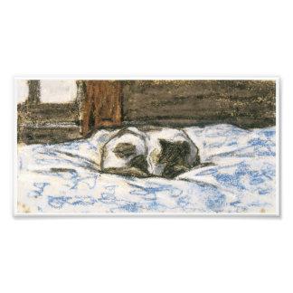 Katt som sovar på en säng vid Claude Monet Fototryck
