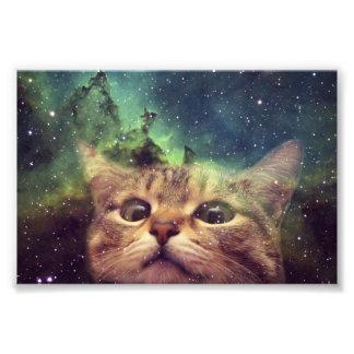 Katt som stirrar in i utrymme fototryck