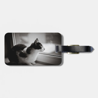 Katt som utanför tittar bagagebricka