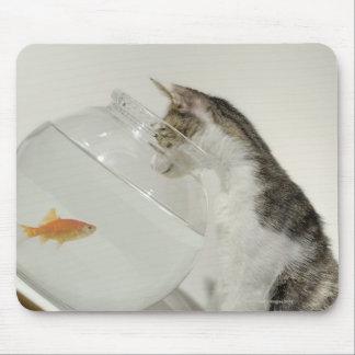 Katt tittar fisk i fishbowl musmatta