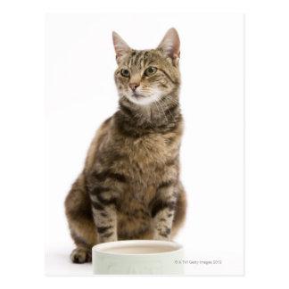 Katt vid bunken vykort
