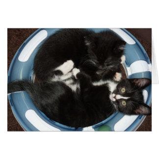 kattbunke hälsningskort