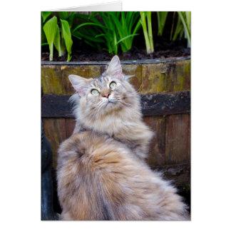 Katten förbigår något tillfälle, noterar kortet hälsningskort