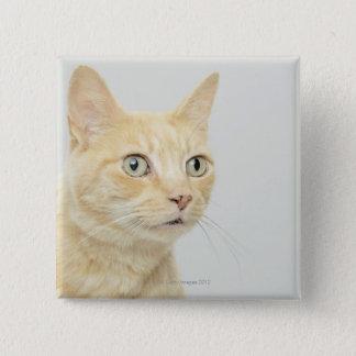Katten med ögon öppnar vitt standard kanpp fyrkantig 5.1 cm