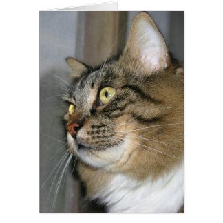Katten som söker efter dig, noterar kortet hälsningskort