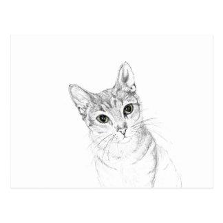 Katten synar en ritateckning vykort