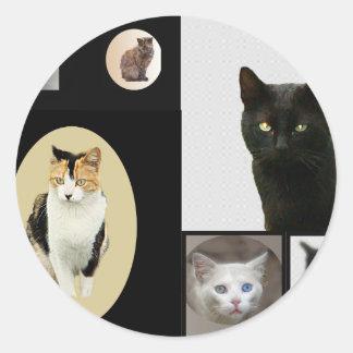 Katter av Kennedy parkerar Runt Klistermärke