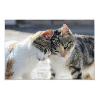 katter fototryck
