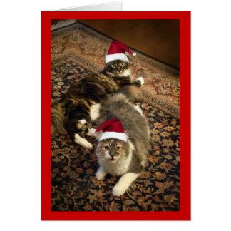 Katter i kort för hälsning för Santa hattjul rolig