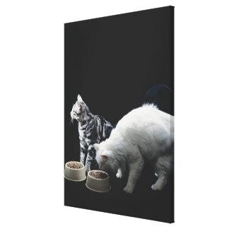 Katter med bunken av mat canvastryck