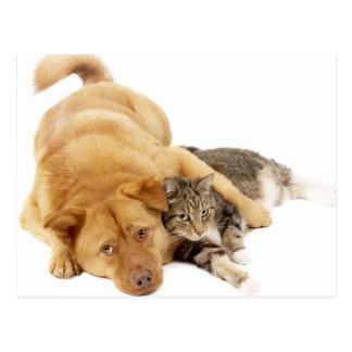 Katter och hundar vykort