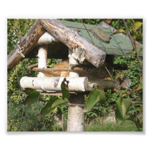 Kattinsida träfåglar bygga bo fotografi