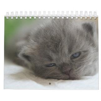 kattkalender kalender