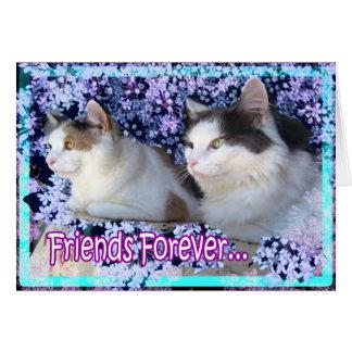 Kattkort, för evigtvänner hälsningskort