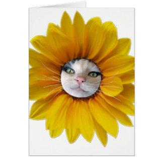 Kattkort, grattis på födelsedagensolsken hälsningskort