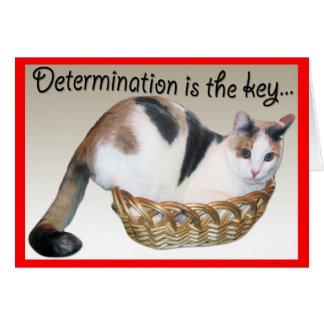 Kattkort, rolig uppmuntran till en vän hälsningskort