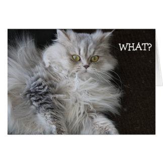"""Kattnågot att säga """"VAD?"""", - roligt födelsedagkort Hälsningskort"""