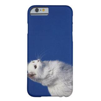 Kattsitta mot blåttbakgrund barely there iPhone 6 fodral