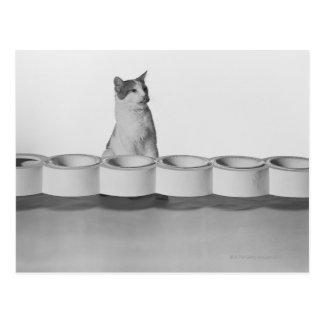 Kattsitta och slicka bredvid den älsklings- bunken vykort