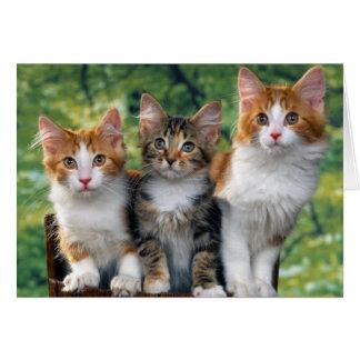 Kattungar Hälsningskort