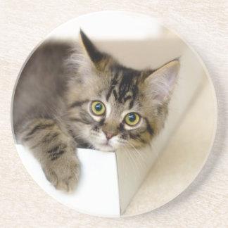 Kattunge i en boxaskustfartyg underlägg sandsten