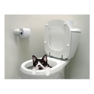 Kattunge i toalettbunke vykort