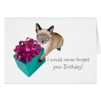 Kattunge med det närvarande födelsedagkortet hälsningskort