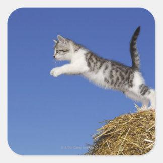 Kattunge som hoppar 2 fyrkantigt klistermärke