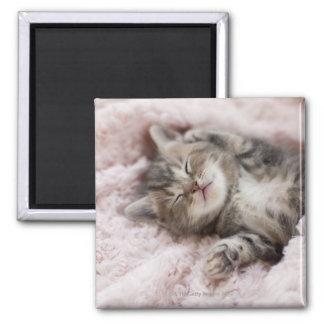 Kattunge som sovar på handduken magnet