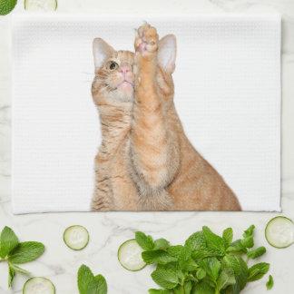Kattungen önskar till torr disk kökshandduk