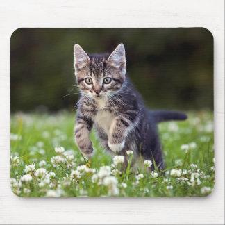 Kattungespring till och med klöver musmatta