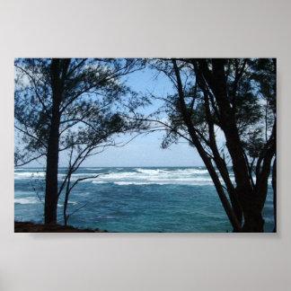 Kauai vägren poster