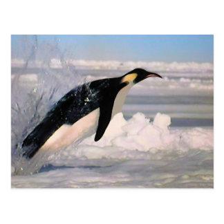 Kejsarearktisk och antarcticpingvinvykort vykort