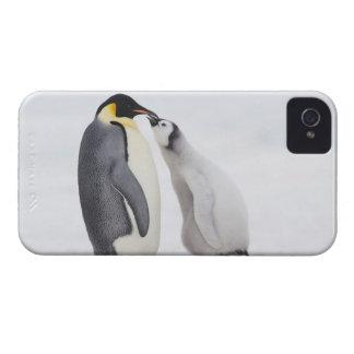 Kejsarepingvin (Aptenodytesforsterien), chick iPhone 4 Case-Mate Skydd