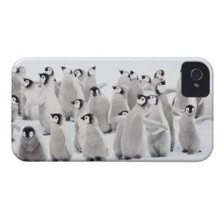 Kejsarepingvin (Aptenodytesforsterien), grupp av iPhone 4 Case-Mate Skydd