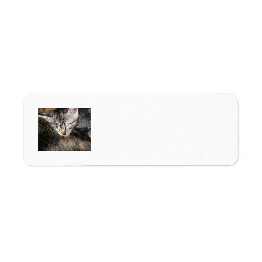 Kelig kattunge returadress etikett
