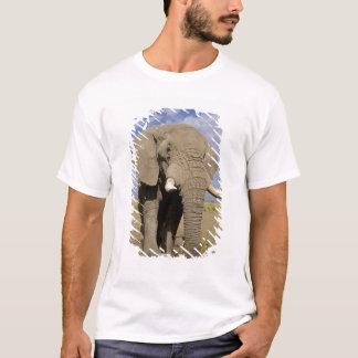 Kenya: Amboseli nationalpark, male elefant T Shirts
