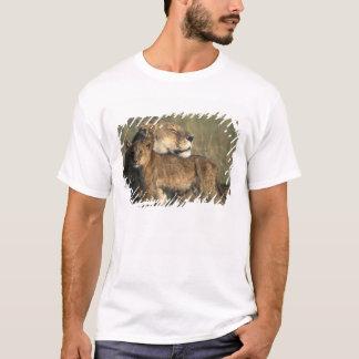 Kenya den MasaiMara leken reserverar, lionessen Tee Shirts