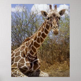 Kenya: Laikipia platå, Loisaba vildmark Poster
