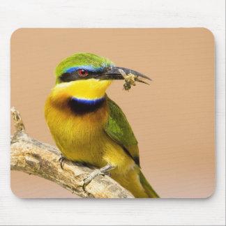 Kenya. Närbild av lite deneater fågeln på limben Musmatta