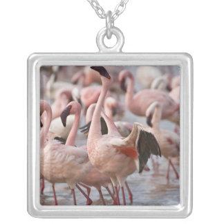 Kenya sjöNakuru nationalpark. Flamingos vadar Silverpläterat Halsband