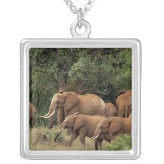 Kenya: Tsavo östlig nationalpark, flockafrikan Silverpläterat Halsband