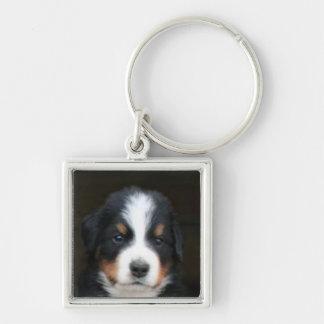 Keychain för valp för Bernese berghund Fyrkantig Silverfärgad Nyckelring