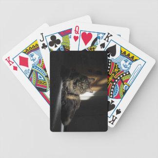 Kimber kattstickor av solljus som leker kort spelkort