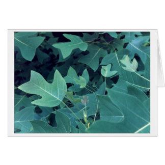 Kinesiskt tulpanträd hälsningskort
