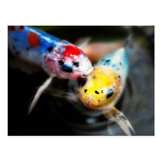 Kissing fish vykort