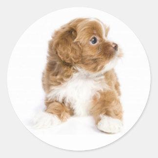 Klistermärke för hund för solbränna- & vitHavanese