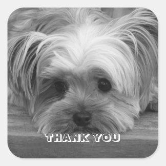 Klistermärke för hund för valp för tackYorkshire
