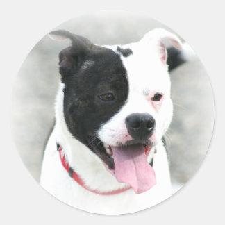 Klistermärkear för amerikanStaffordshire Terrier Runt Klistermärke